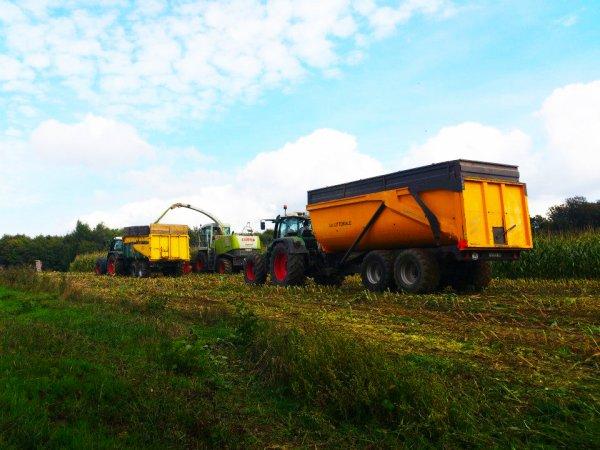 Ensilage de maïs 2013