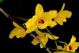 Symbolique des Orchidées