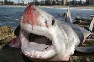 les attaques de requins sa peut arrivee