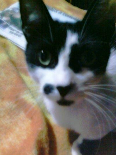 Mon chaton :P