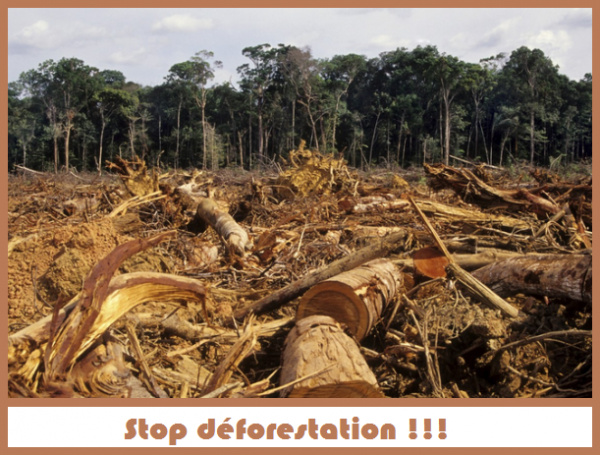10 dangers of deforestation Countries in which business-as-usual projections show a low deforestation risk [ 10–12] an accurate identification of deforestation risk requires,.