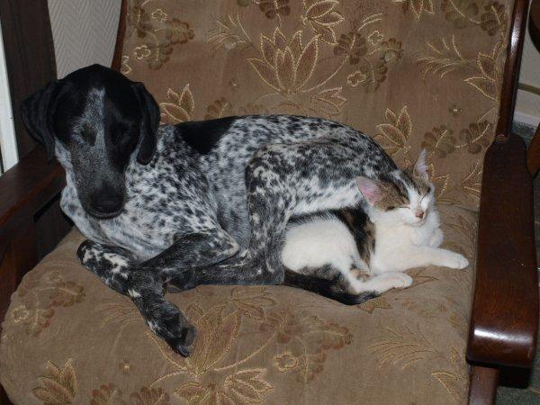 Comme chien et chat ^^