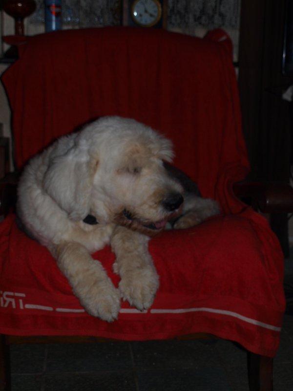 Monsieur Griboulle dans le fauteuil comme un pacha .....