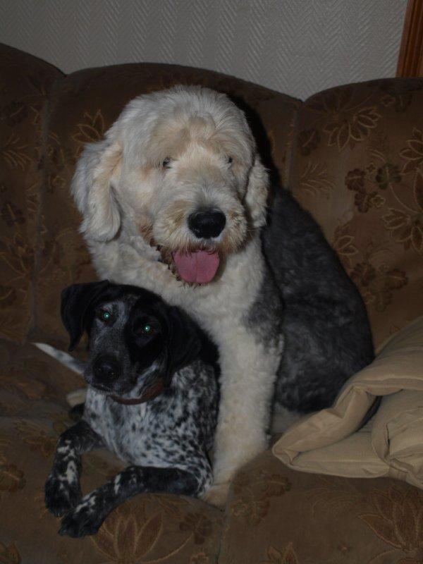 Papa !!! tu viens quand avec nous dans le canapé ?
