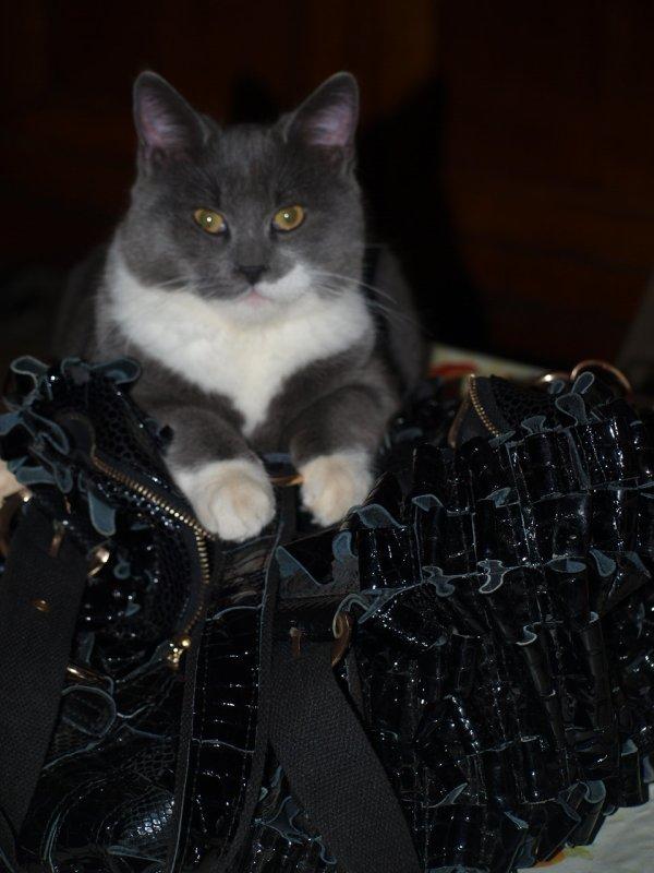 Essaye de piquer le sac de maman !!!