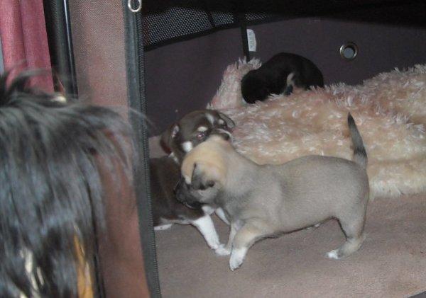 choupy est tantine des 4 bébés de pinup