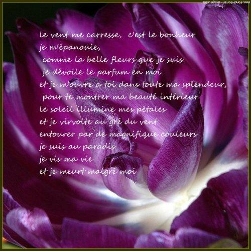poeme d'une fleur