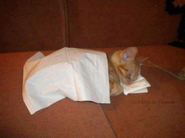 chat dor