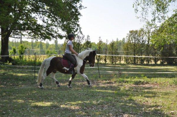 Petit poney !