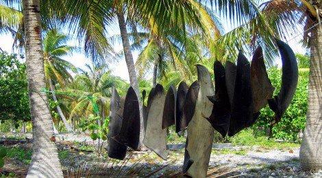 requins mutilés et tués