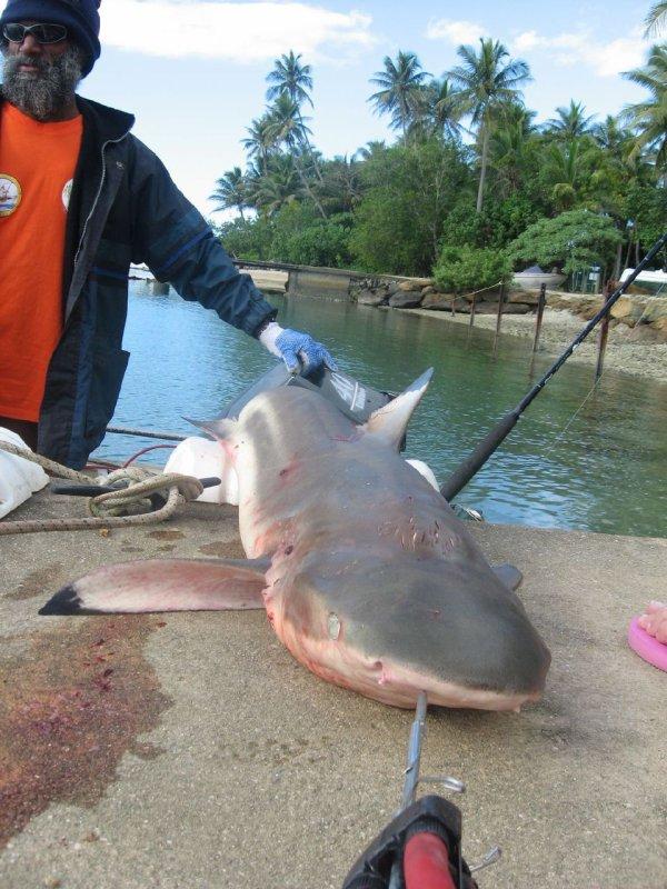 Les requins sont les véritables victimes