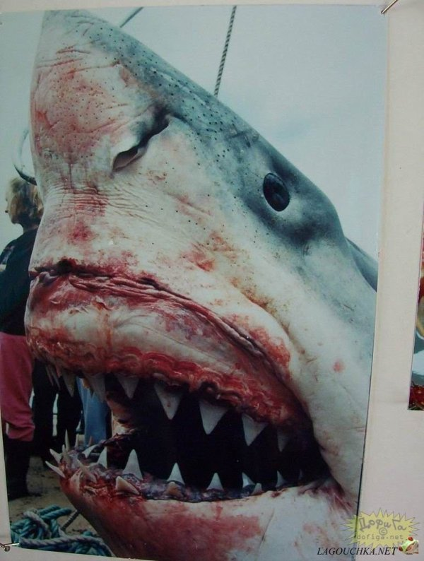 Sauvons les requins des hommes inhumains