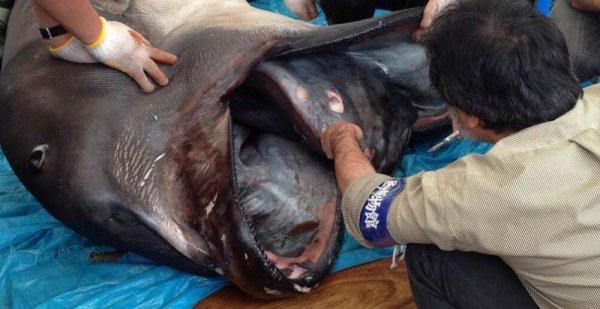 requins morts