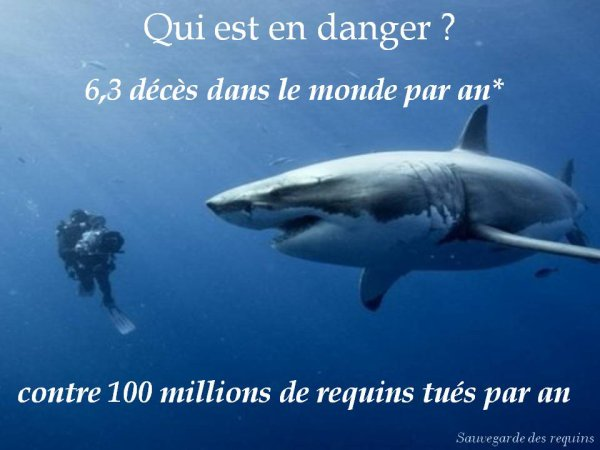 infos requins