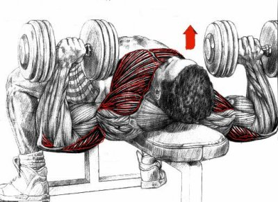 Blog de muscu 83 muscu - Developpe incline avec halteres ...