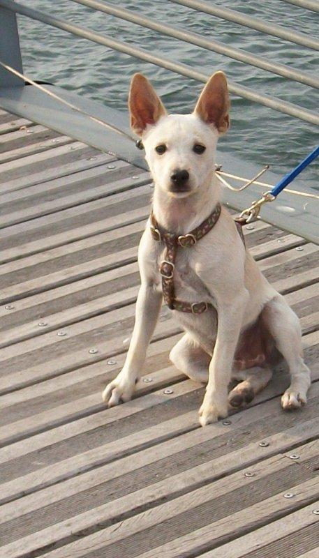 Mon adorable chien Filou <3