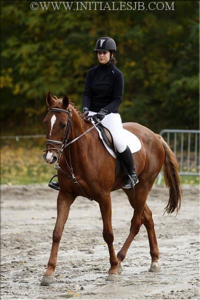 """""""Monter un cheval vous donne goût de liberté."""" H. Thomson"""