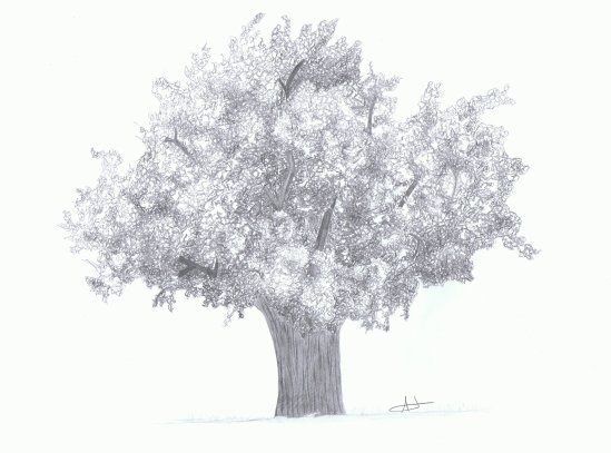 Dessiner un arbre portraits et dessins - Dessiner un arbre ...