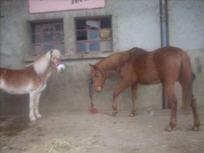 ■ Le cheval est votre miroir . ■