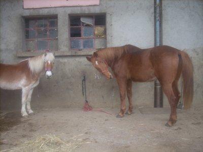Son hennissement ressemble à l'ordre d'un monarque et sa contenance force le respect. C'est bien un cheval . . .