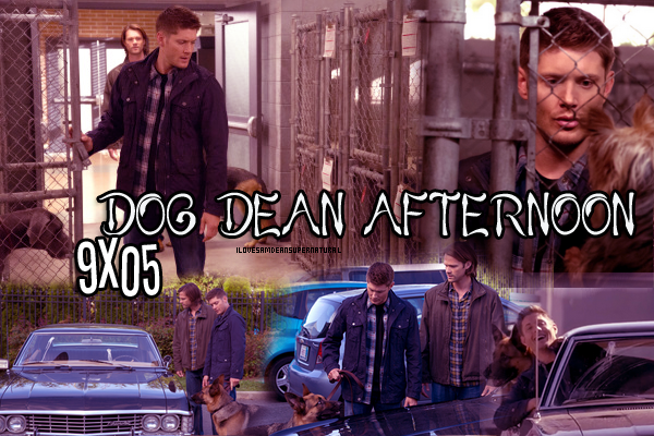 Episode 5 : Dog Dean Afternoon Créa by §