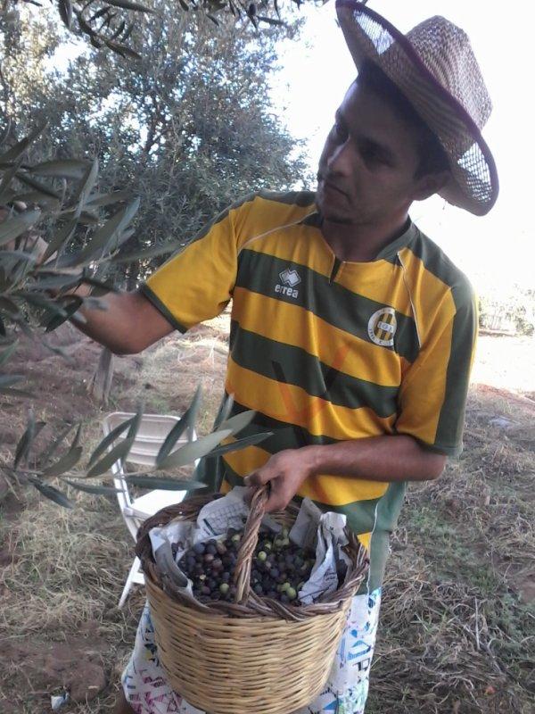 et oui la tradition des olives