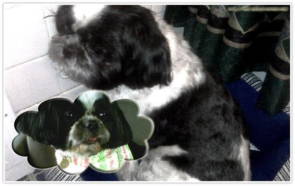 JACK HIS DOG  MON PRINCE AUX CHEVEUX D'OR