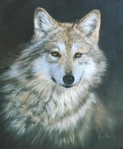loup mon ami