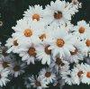 """""""L'homme regarde la fleur, la fleur sourit"""""""
