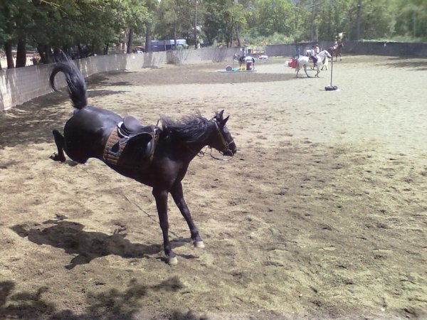 Sexe noir équitation