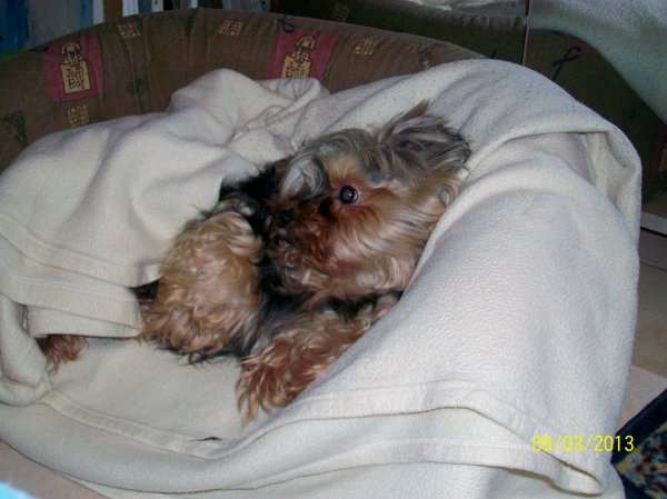 UNE HISTOIRE EXTRAORDINAIRE MA PUPUCE SUITE Pupuce est sortie d'affaire elle aime énormément dormir envelopper dans sa couverture. Elle a désormais sa place au sein de la maison, notre vétérinaire l'appelle notre petit miracle  à nous trois Pupuce a gagné. Elle a désormais une retraite bien mérité et se porte comme un charme :-) Jenny.