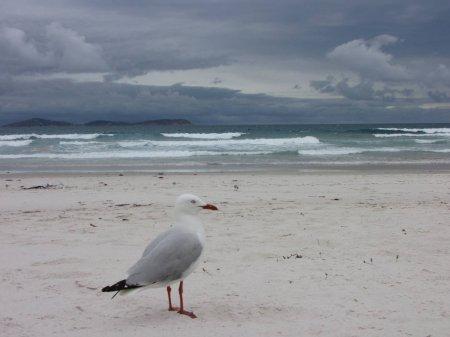 Il y a un an : lundi 7 décembre 2009 : Wilsons Promontory National Park, Squeaky Beach, détroit de Bass