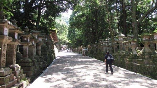 Nara - chemin de lanternes en allant vers le sanctuaire de Kasuga