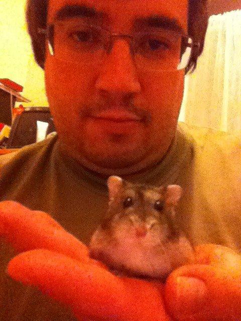 Riri le micro hamster