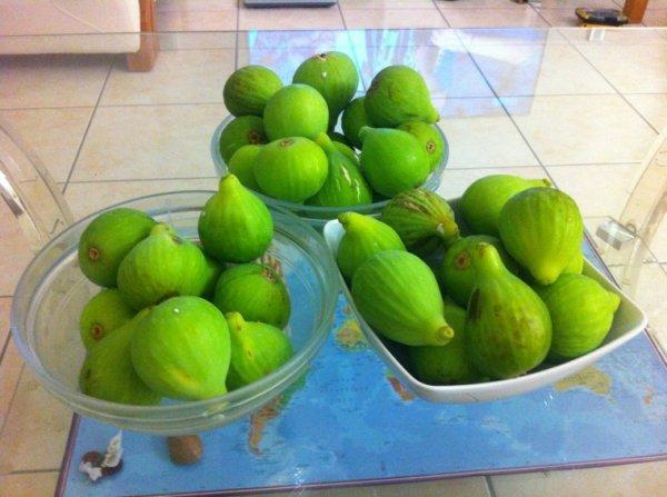 Récolte de figues 2013