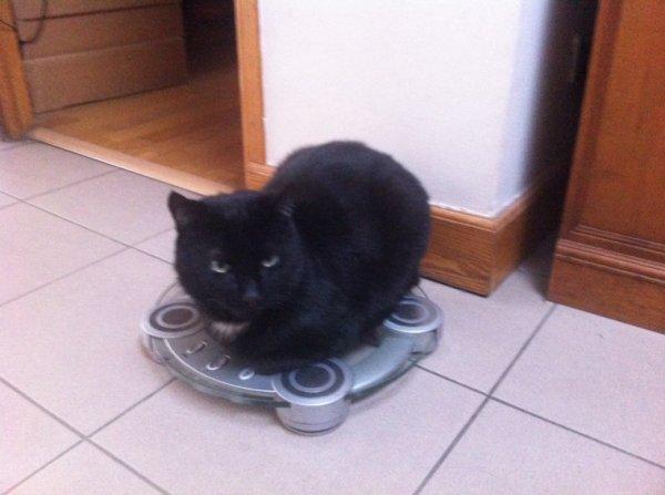 Chat pèse combien ?