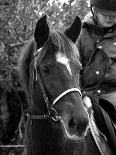 la complicité d'un cavalier et de son cheval c'est ce qu'il y a de plus beau..