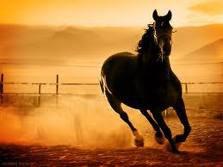 الخيول الاصيلة