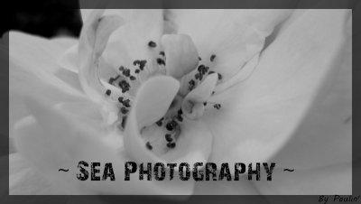 ~ Sea Photography ~
