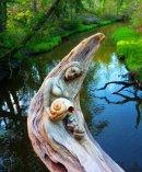 Photo de love-ange-gardien