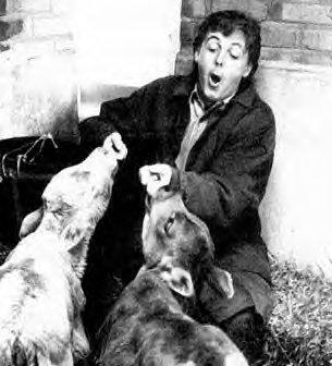 Paul , la nouvelle nounou des animaux !