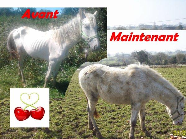 Fiche chevaux