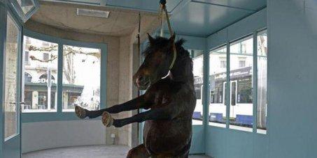 Pétition un cheval empaillé de l'art sans limites !!