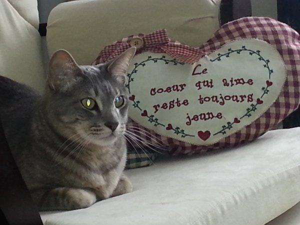 Mon chat Grichou que j'aime tend :):) <3 ( 2 ans )