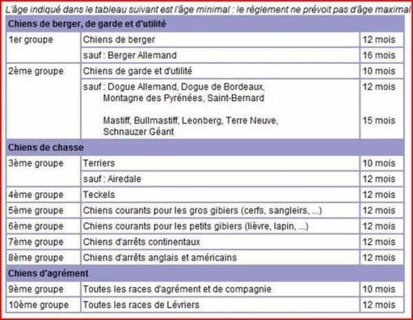 Tableaux D Age Humain Des Chiens Et Des Differents Groupes De Chien Un Animal Ne Pleure Pas Il Souffre En Silence