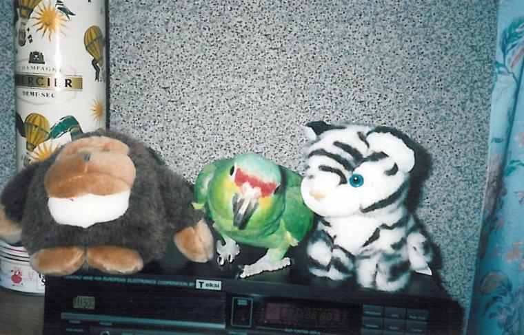 Un tournant dans mon élevage... Les perroquets