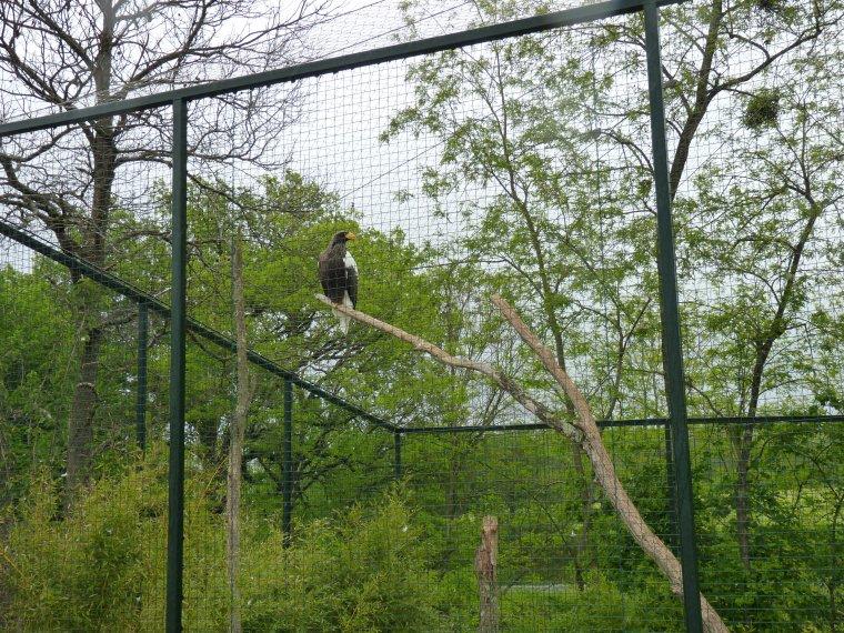 Zooparc de beauval 1 re partie perruches perroquets for Zoo exterieur