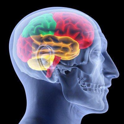 Pourquoi le Cerveau