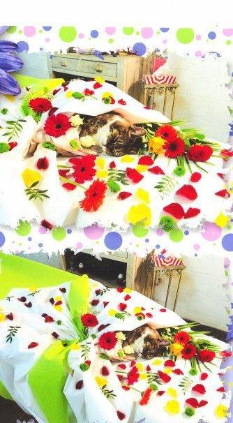 nico813-festival-BD-2013  fête ses 60 ans demain, pense à lui offrir un cadeau.Aujourd'hui à 07:18