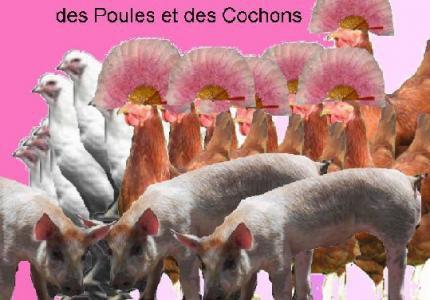 Des Cochons Et Des Poules